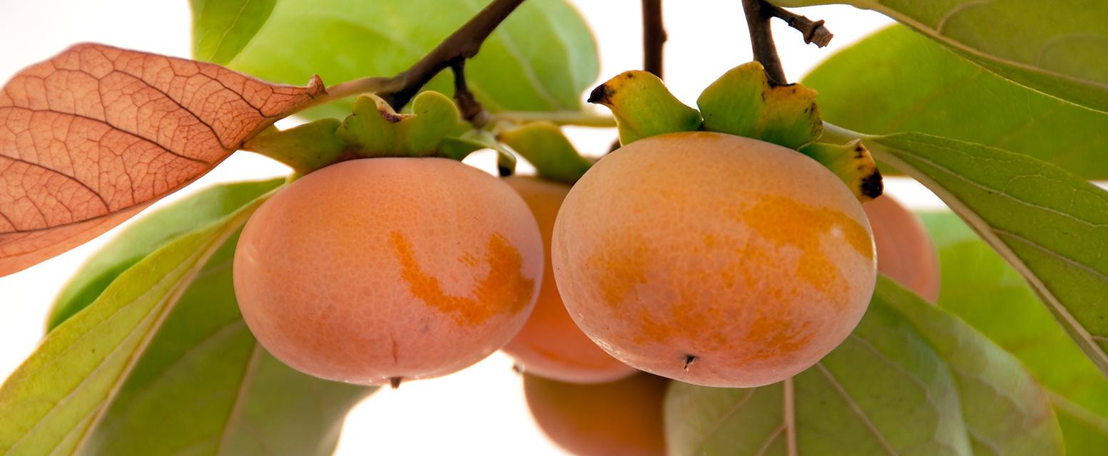 MG Produce | Distributor of Farm-Fresh Asian Fruits and